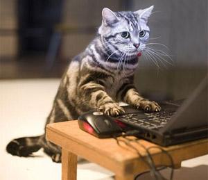 the-cat-diary.jpg